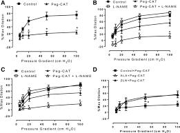 pgc 1α peroxisome proliferator u2013activated receptor γ coactivator 1