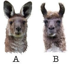 dammit that still looks like a kangaroo