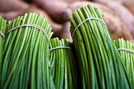 erba cipollina in vaso erba cipollina aromatiche coltivare erba cipollina