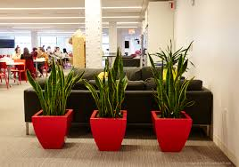 indoor plants for a healthier office jay scotts