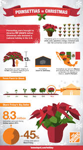 black friday 2016 home depot poinsettia the home depot how poinsettias ended up in your home this holiday