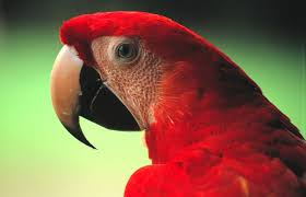 birder u0027s world field of view new research shows that much of bird