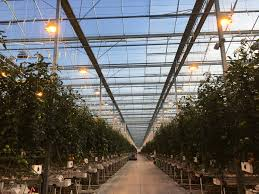 Greenhouse Lights Greenhouse Grown Redefines In Season Availability Naturefresh Farms