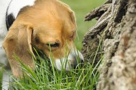 list of plants poisonous to dogs lovetoknow