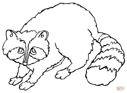 cute raccoon coloring page free printable coloring pages