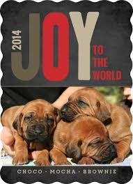 joy of christmas pet photo card by purpletrail com plus dog