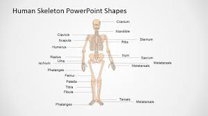 presentation of the human body in powerpoint slidemodel