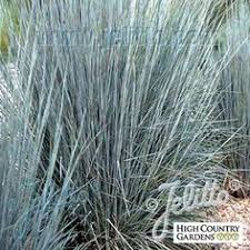 17 top ornamental grasses grasses plants and garden grass