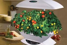 basics of indoor gardening veggie gardener