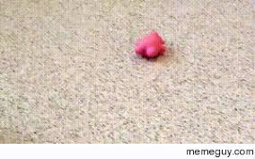 Armadillo Meme - armadillo playing meme guy