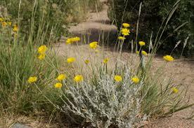 native plant nursery santa cruz the backyard gardener agriculture and natural resources blogs