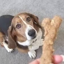 dog peanut butter peanut butter dog biscuits recipe allrecipes