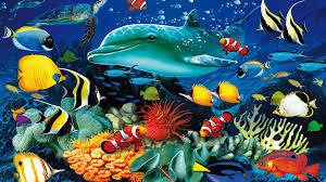 ocean underwater world marine life dolphin sea turtle colorful