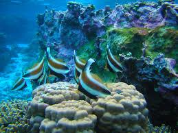 American Samoa Map Snorkeling And Diving National Park Of American Samoa U S