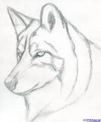 how to draw a wolf head mexican wolf step 3 drawing pinterest