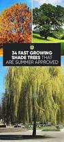 best 25 fast growing shade trees ideas on pinterest fast