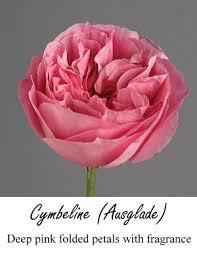 Flowers Salinas - pink rose is tribute to royal bride kate middleton flirty fleurs