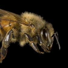 quotes images in hd honeybee national geographic