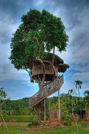 House Design And Ideas 78 Best Tree Houses U003c3 Images On Pinterest Treehouses