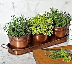 Indoor Herbal Garden Best 25 Indoor Window Garden Ideas On Pinterest Indoor Herbs