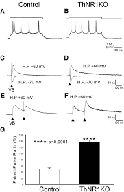 thalamic nmda receptor function is necessary for patterning of the