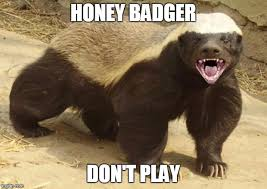 Honey Badger Memes - honey badger meme generator imgflip