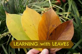 learning with leaves laughing kids learn