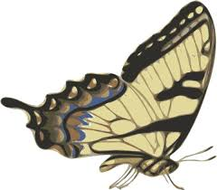 butterfly papilio turnus side view clip free vector in open