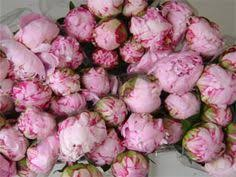 bulk peonies simply suzanne s at home pink peonies indoor decorating
