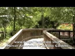 Botanical Gardens Houston Mercer Arboretum Botanic Gardens Frugal Things To Do In