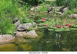 lily pond in rock garden stock photos u0026 lily pond in rock garden