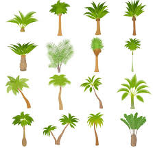 tropical tree illustration vector 02 vector plant free