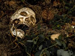 beside of human skull buried in the soil with the roots of the