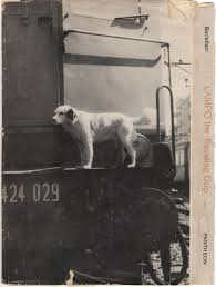 The amazing story of lampo the traveling dog unusual