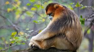 bbc earth apes reveal secrets to good sleep