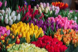 flower shops best flower shop peaseblossoms flowers best of calgary