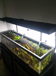 10 gallon planted tank led lighting diy high end planted tank balleronabudget
