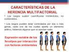 <b>HERENCIA MULTIFACTORIAL</b> El