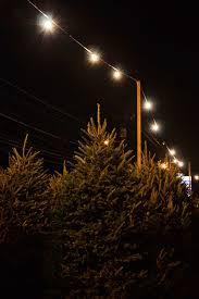 lostvestige the christmas tree lot