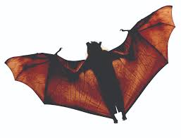 what does a bat look like facts about bats u0026 identification