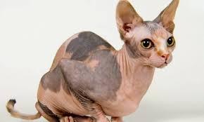 Extreme e animais de estimação Cães e gatos #DE03