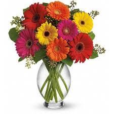 Daisy The Flower - gerbera daisy bouquets the flower shoppe jacksonville nc florist