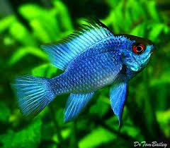 best 25 fish for sale ideas on goldfish for sale
