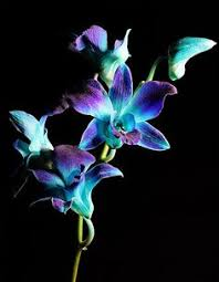 blue orchids blue orchids flowers can feel your energy one time i cried