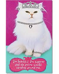 amazon com j8016 jumbo funny birthday card u0027cat lady starter