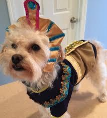 Halloween Dog Costume King Mutt Halloween Dog Costume Shipping Baxterboo