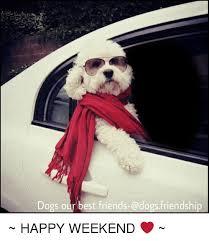 Happy Weekend Meme - dogs our best friends dogs friendship happy weekend best