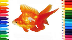 drawing goldfish how to draw goldfish coloring pages for kids