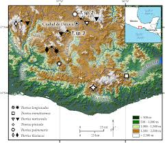 Oaxaca Mexico Map Biology Of Tiny Animals Three New Species Of Minute Salamanders