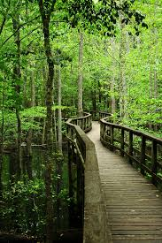 South Carolina natural attractions images 30 things to do in beaufort south carolina south carolina jpg